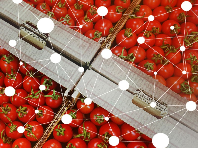 New tomatoes supply chain on blockchain